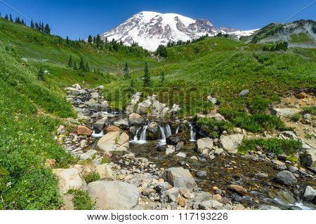 Mount Rainier With A Glacier Stream And Wildflowers