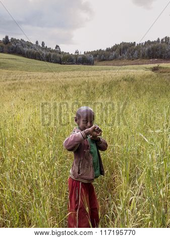 OROMIA, ETHIOPIA-NOVEMBER 5, 2014: Unidentified boy plays in a wheat field in Ethiopia