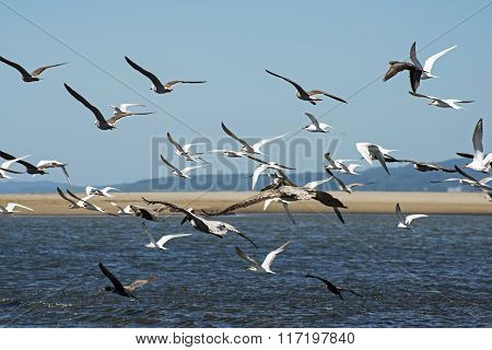 Flock of seabirds flying over ocean