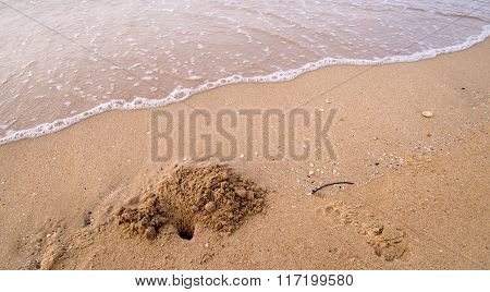 Tropical Sand Crabs Showing Ball Like Patterns Left On Beach After Feeding.