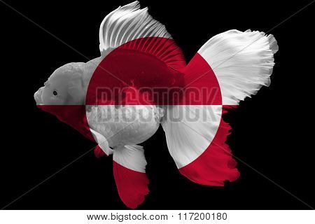 Flag Of Greenland On Goldfish