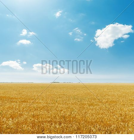 golden harvest field and blue sky