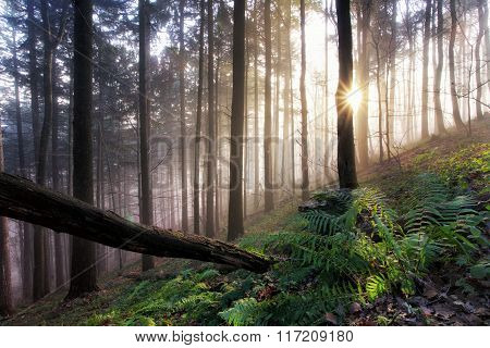 Primeval Forest With Ferns, Jungle