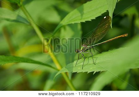 Green Dragonfly On The Leaf