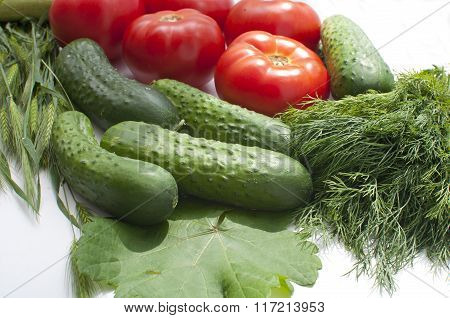 tomato dill and cucumber on a white background