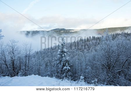 Winter Background With Snowy Fir Trees In Mountains