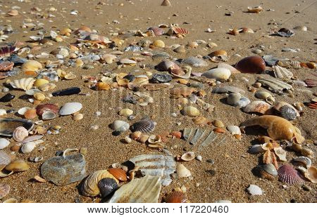 Beach filled with many kinds of shells