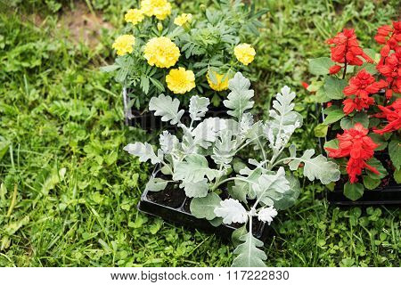 Flowers prepared for planting