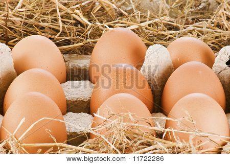 Eggs In Pack