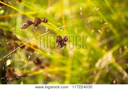 Blade Of Grass On Meadow Abstract Nature Background