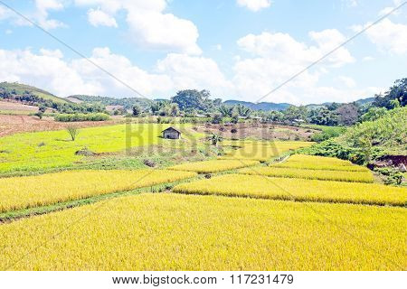 Landscape with rice fields in the countryside from Myanmar