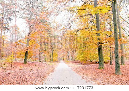 Fall in forest in the Netherlands