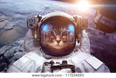 Astronaut cat in outer space against the backdrop of the planet earth. Elements of this image furnis