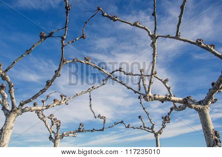 Close-up Of Leafless Branches Against Of Blue Cloudy Sky