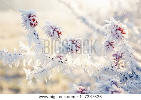 Hoarfrost On Leaves
