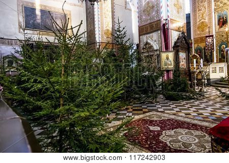 Christmas Trees In The Cathedral Of Alexander Nevsky In Tallinn. Estonia.