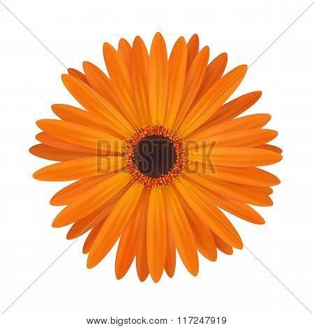 Bright spring flower.