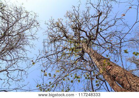 Nature In Phukradueng