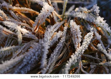 Winter Frosty Grass Pattern