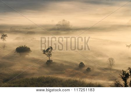 Aerial View Of Trees In Morning Fog