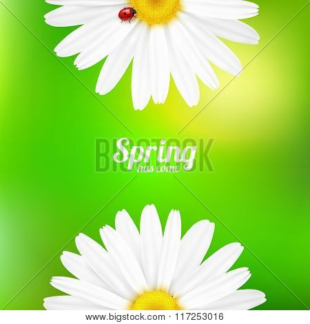 Spring flowers composition.