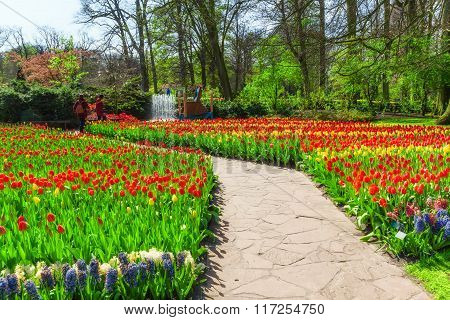 Colorful spring flowers in Keukenhof Garden, Netherlands.