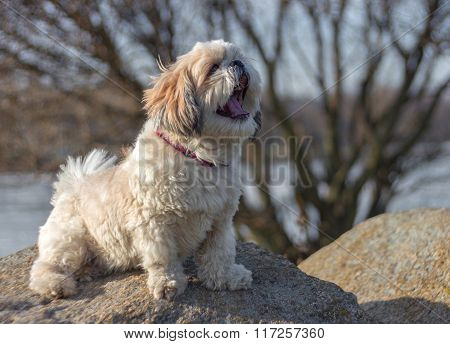 Dog Sitting And Yawns