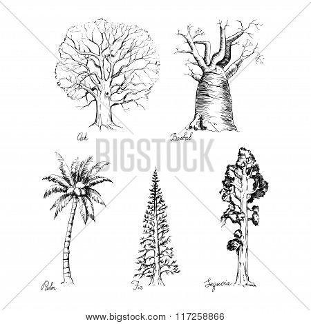 Set of hand-drawing style of graphic trees
