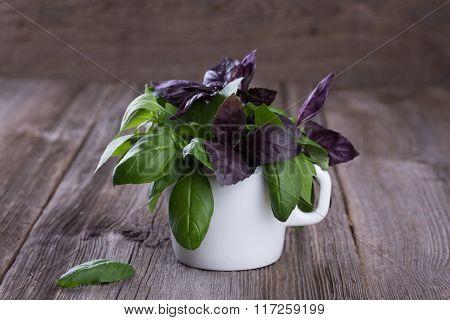 Bunch Of Fresh Organic Basil In White Mug.