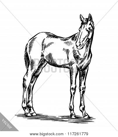 engrave ink draw horse illustration