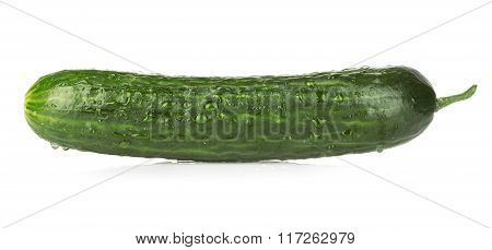 Fresh Ripe Green Cucumber Isolated On White Background.