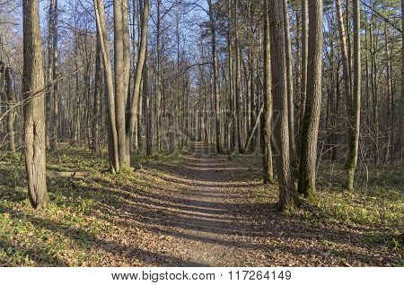 The Path In The Autumn Forest.