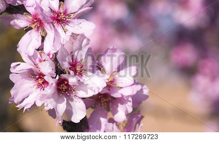 Atmospheric Flower Blossom