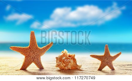 Two starfish and seashell on white sand beach with ocean