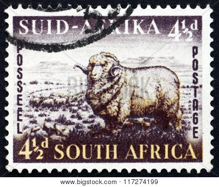 Postage Stamp South Africa 1953 Merino Ram And Sheep