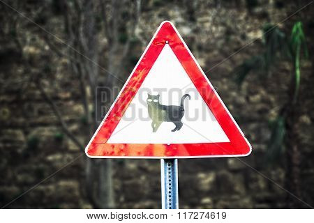 Road sign beware cat - near crossroad