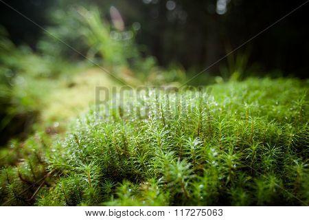 Beautiful mountain nature closeup