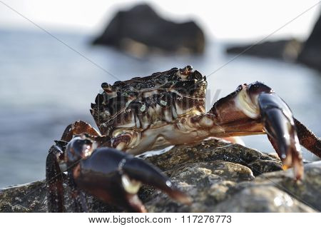 Crab On A Background Sea