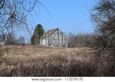 a old barn thru the trees and weeds