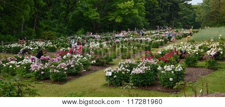 Arboretum Peony Garden
