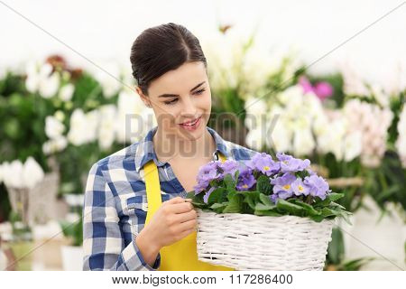 Florist Woman Smiling With White Wicker Basket Flowers Of Purple Primroses