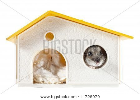 Hamster at Home