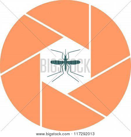 Mosquito In Aperture
