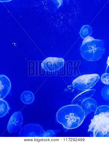 A sea of jelly fish