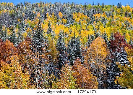 Autumn Aspen Frosting