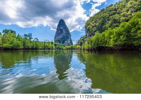 Mangrove forest Krabi