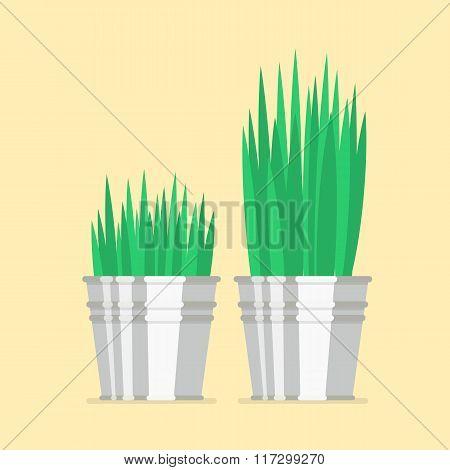 Plant In Zinc Pots Flat Icon