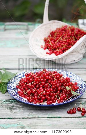 organic red currants on the plate
