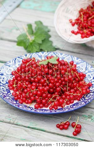 red currants organic red currants on the plate