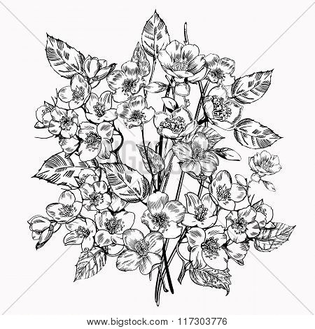 Jasmine flower. Vintage elegant flowers. Black and white vector illustration.  Botany.